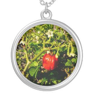 pimienta roja del solo habanero en planta colgante redondo