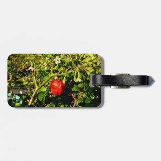 pimienta roja del solo habanero en planta etiqueta para maleta