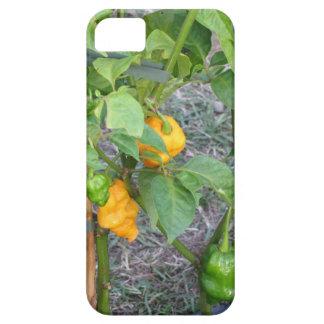 Pimientas de chile amarillas funda para iPhone SE/5/5s