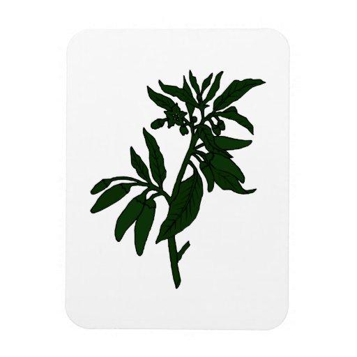 Pimientas de chile verdes en la planta verde oscur imanes flexibles