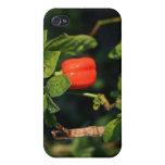 pimiento picante rojo del habanerno contra las hoj iPhone 4 cobertura