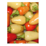 Pimientos picantes amarillo rojo y naranja postal