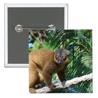 Pin agarrado del Lemur