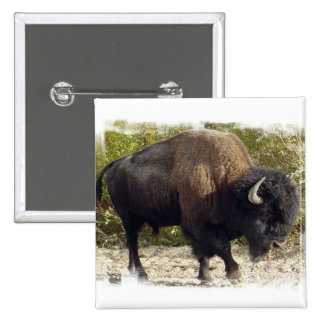 Pin americano del cuadrado del búfalo
