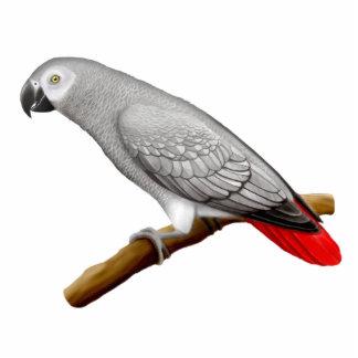 Pin amistoso del loro del gris africano de Congo Pin Fotoescultura