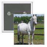 Pin árabe del cuadrado del caballo