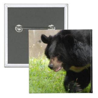 Pin asiático del oso negro