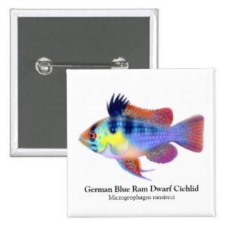 Pin azul alemán del Cichlid del enano del espolón
