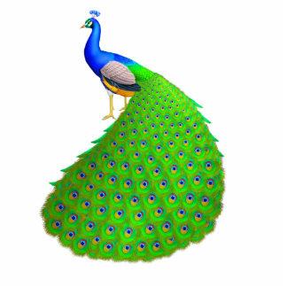 Pin azul indio elegante del pavo real pin fotoescultura