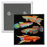 Pin colorido de los Killifishes