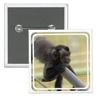 Pin copetudo del mono del capuchón