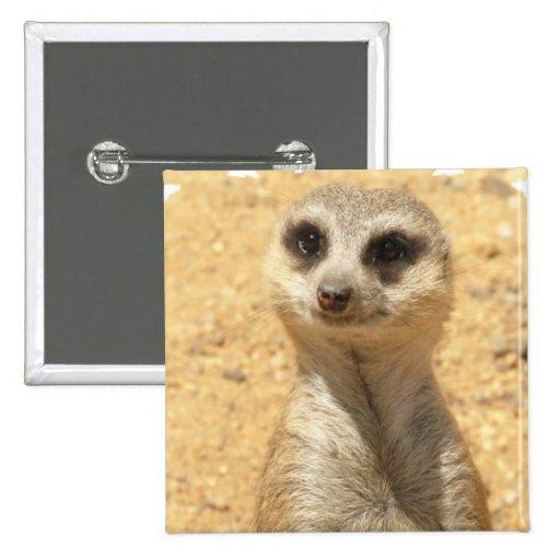 Pin cuadrado curioso de Meerkat