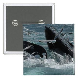 Pin cuadrado de la ballena jorobada