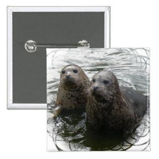 Pin cuadrado de las crías de foca