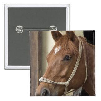 Pin cuadrado de los caballos árabes