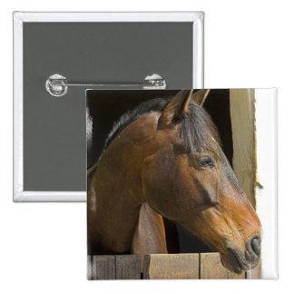 Pin cuadrado de los caballos excelentes