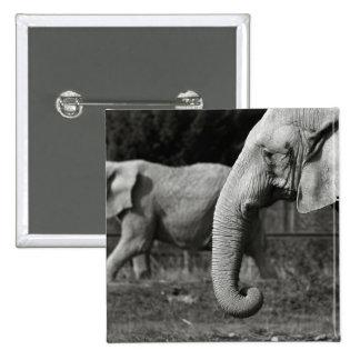 Pin cuadrado de los elefantes asiáticos
