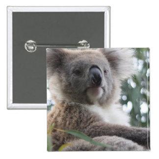 Pin cuadrado de los hechos del oso de koala
