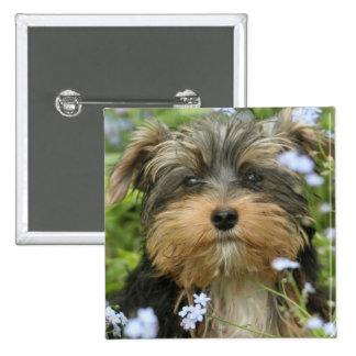 Pin cuadrado de York Terrier