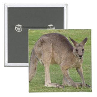 Pin cuadrado del canguro