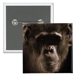 Pin cuadrado del chimpancé