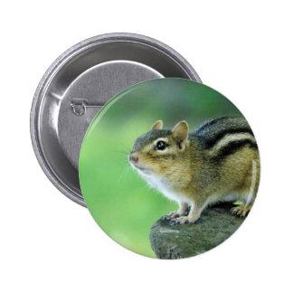 Pin curioso del Chipmunk Pin Redondo 5 Cm