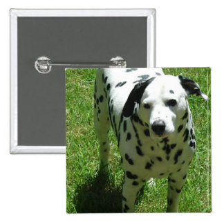 Pin dálmata del cuadrado de la foto pin cuadrada 5 cm