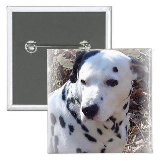 Pin dálmata del cuadrado del perro del fuego pin cuadrada 5 cm