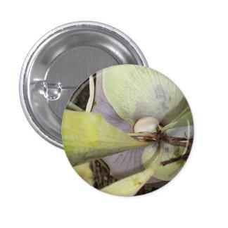 Pin de Bella Bromeliad