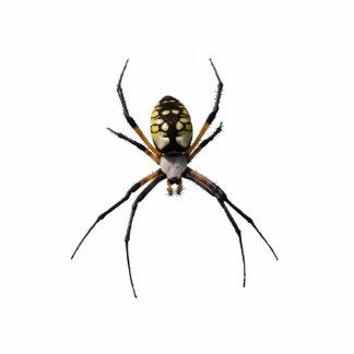 Pin de la araña del Argiope Escultura Fotografica