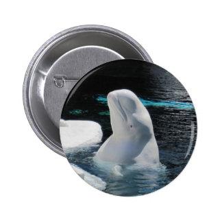 Pin de la ballena de la beluga pin redondo 5 cm