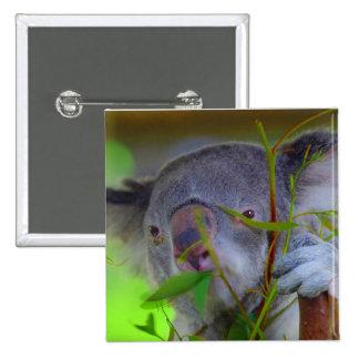 Pin de la consumición de la koala