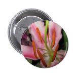 Pin de la flor