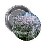 Pin de la flor de cerezo