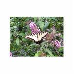 Pin de la mariposa y de la flor escultura fotográfica