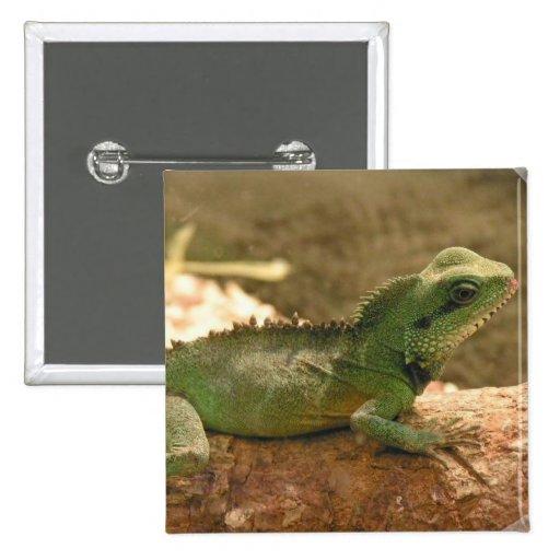 Pin de las fotos de la iguana