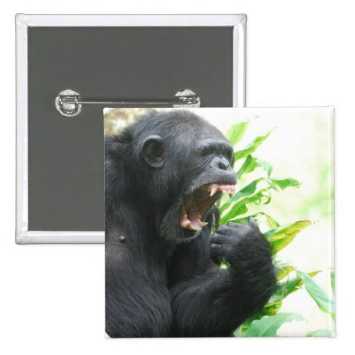 Pin de los colmillos del chimpancé