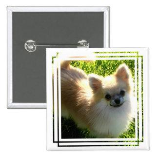 Pin de los perritos de Pomeranian