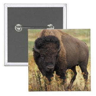 Pin de madera del cuadrado del bisonte