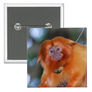 Pin de oro del Tamarin del león