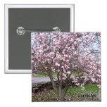 Pin de piedra de las magnolias