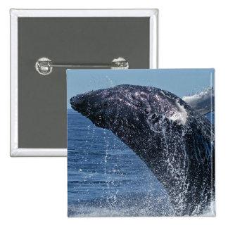 Pin de salto de la ballena jorobada