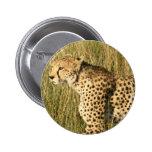 Pin de vagabundeo del guepardo