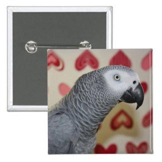 Pin del botón del loro del gris africano del el dí