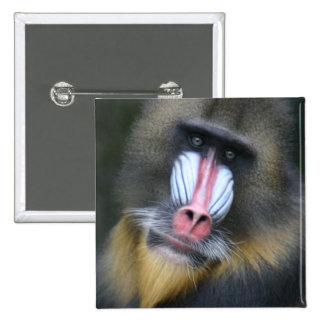 Pin del cuadrado de la cara del babuino
