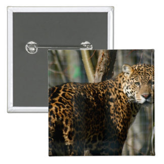 Pin del cuadrado de la foto de Jaguar