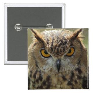 Pin del cuadrado de la foto del búho