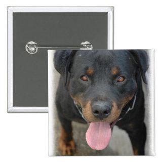 Pin del cuadrado de la imagen de Rottweiler