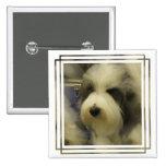 Pin del cuadrado de la imagen del perro pastor