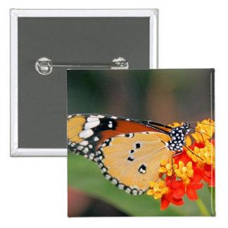 Pin del cuadrado de la mariposa de la reina